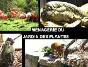 Menageire du jardin des plantes